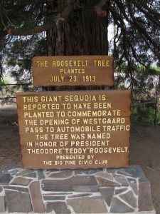 Plaque commemorating the planting of the Roosevelt Tree