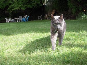 Mnem, who was known for growling. Of all the cats I have known, maybe Mnem was the last one to mess around with.