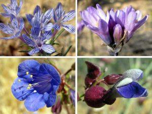 Purple & Blue Flowers