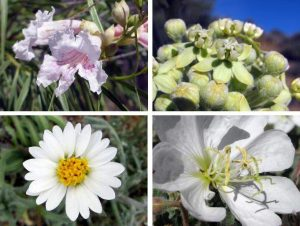 White & Cream Flowers