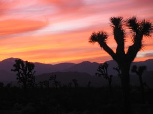 Sunset in Joshua Tree Country