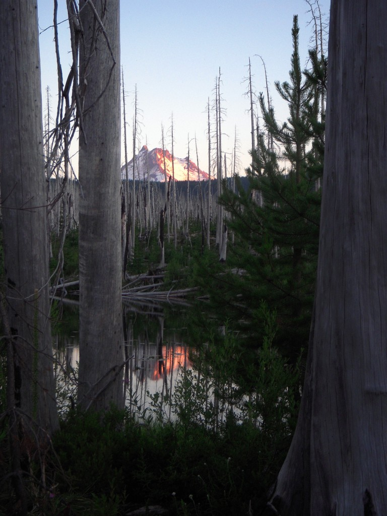 Mt. Jefferson at sunset in snag forest
