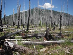 Snag Forest, Olallie Butte in the background