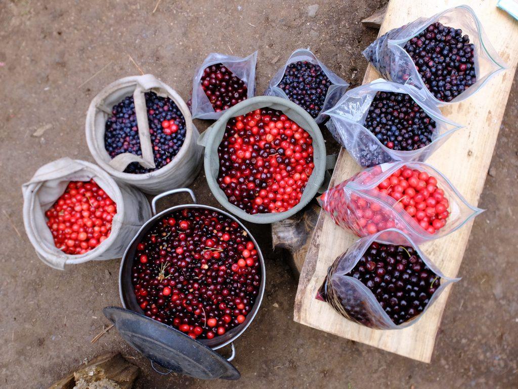 Cherries & Saskatoons