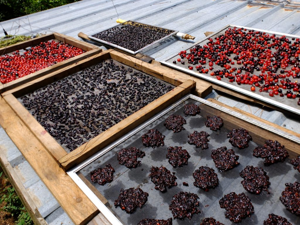 Saskatoons and cherries drying on roof.