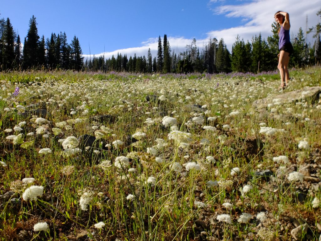 Yampah field in Wallowa-Whitman Nat'l Forest