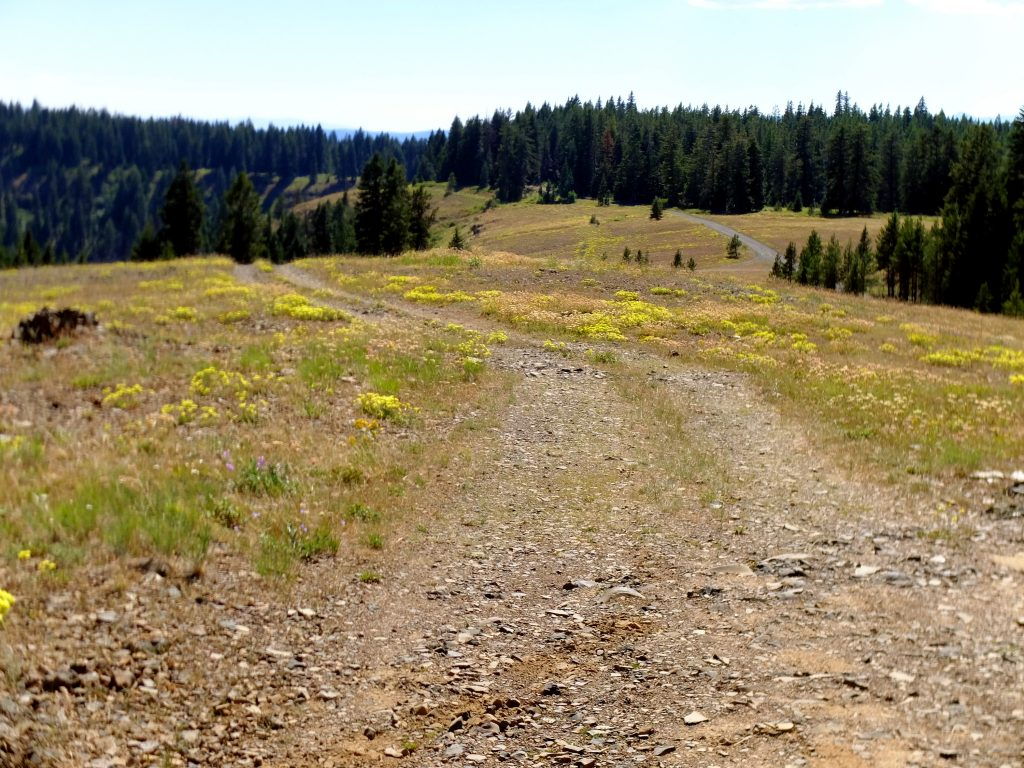 Oregon rim of Hell's Canyon - typical gravel roads along the ridges