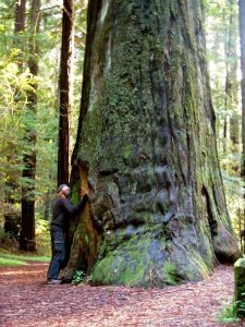 Hugging a Redwood tree in 2012