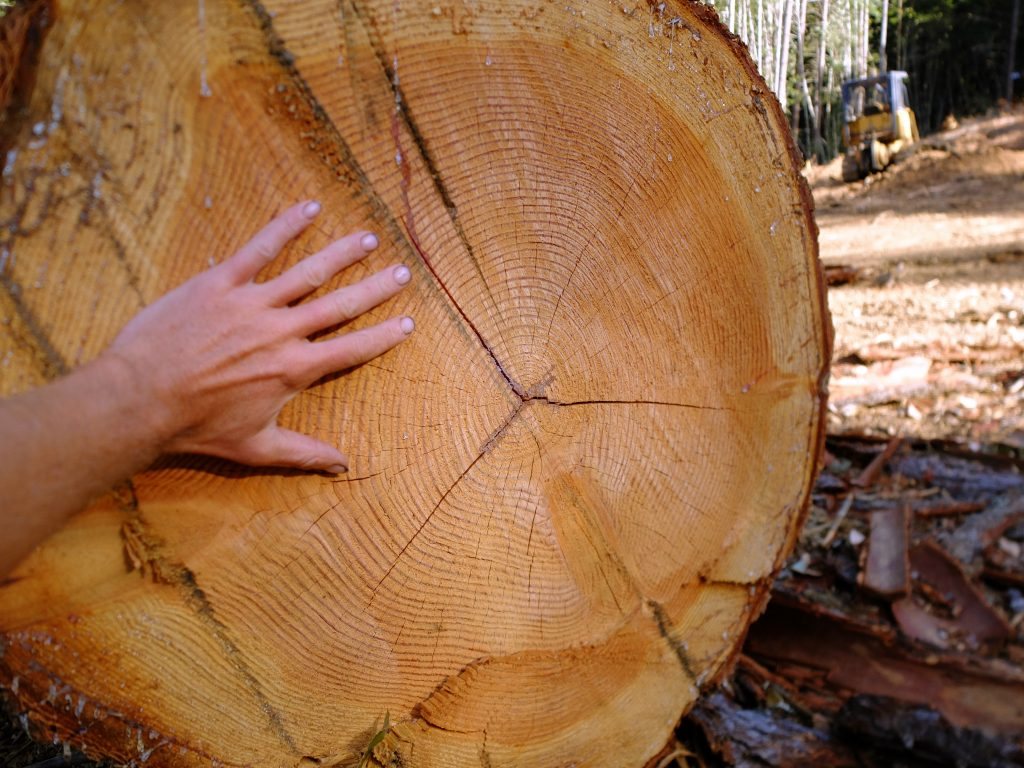 The author's hand, showing scale on a log in the clear-cut