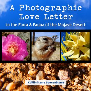 photographic-love-letter-front-cover-850pix