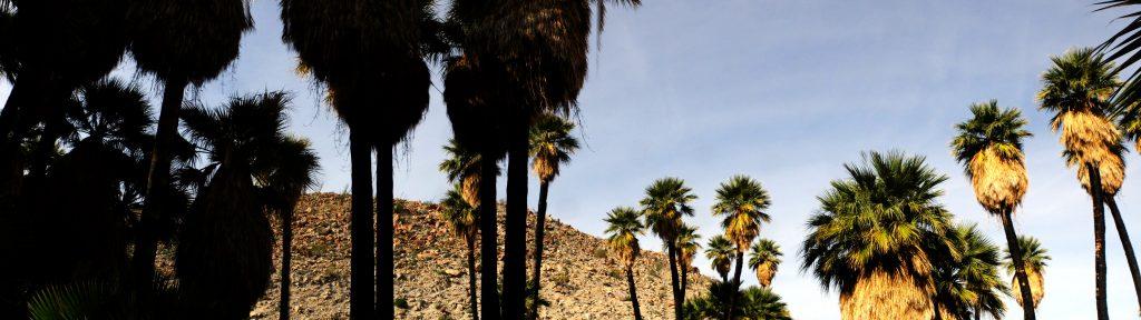 palms-palmbowlgrove-panorama01