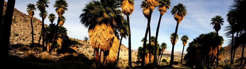 palms-palmbowlgrove-panorama02