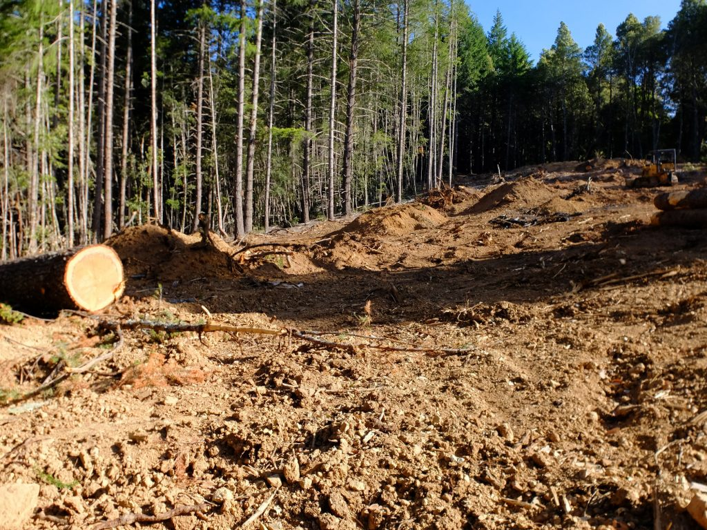 Clear-cut in Humboldt County, 2016, making way for Cannabis cultivation