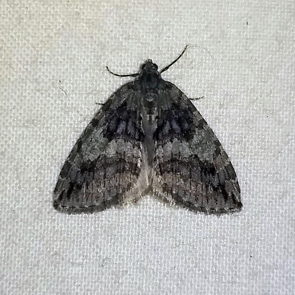 Moth, indoors at night