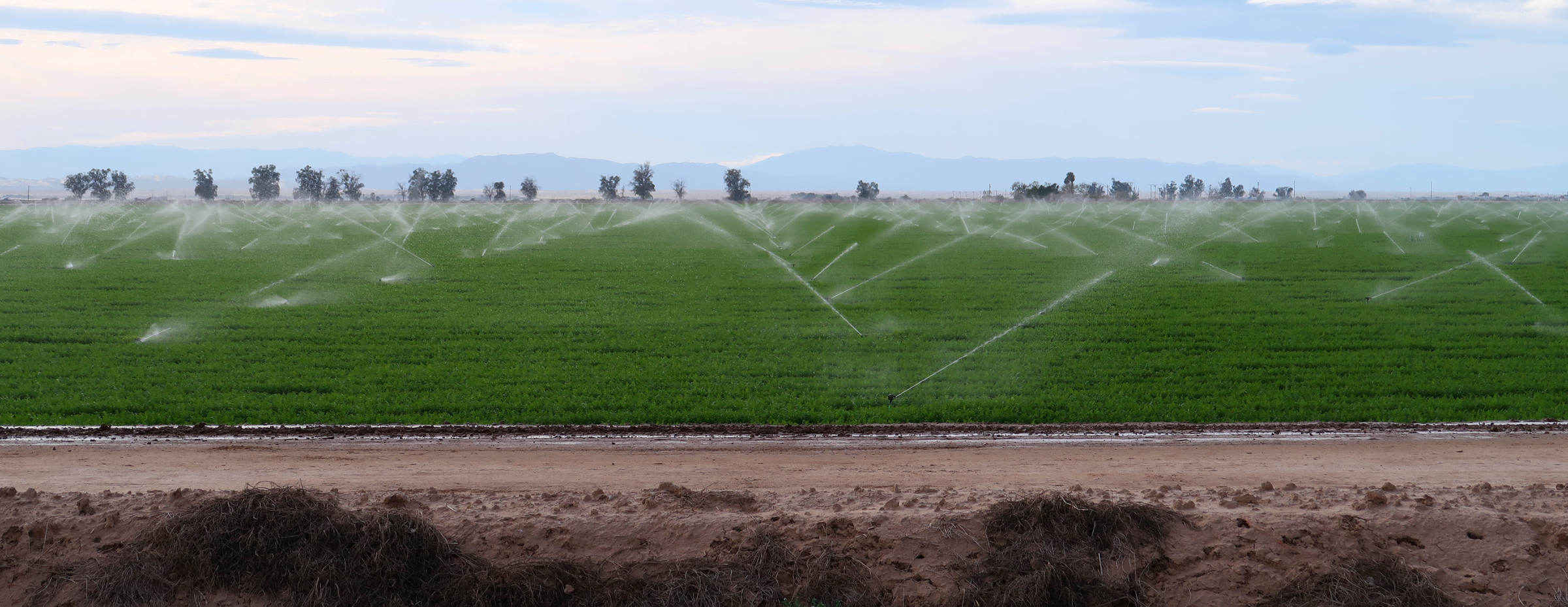 Irrigated field in southern California, in the desert near the Salton Sea