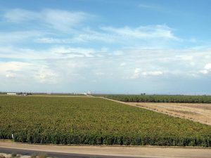 Agricultural fields in the Sacramento Valley, Autumn 2014.