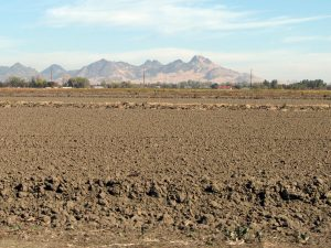 Agricultural fields in Sacramento Valley, with Sutter Buttes in background, Autumn 2014.