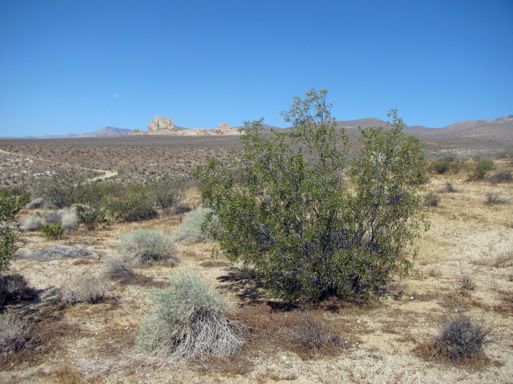 Flora of Freeman Canyon
