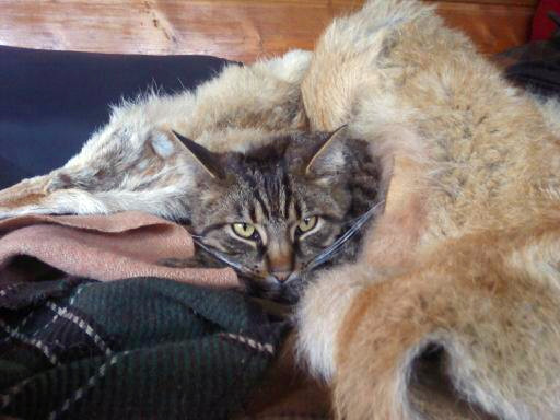 Firepit Cat
