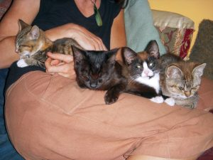"The ""Labor Day Kittens,"" lined up on a friend's lap. Two grew up to be cats with us."