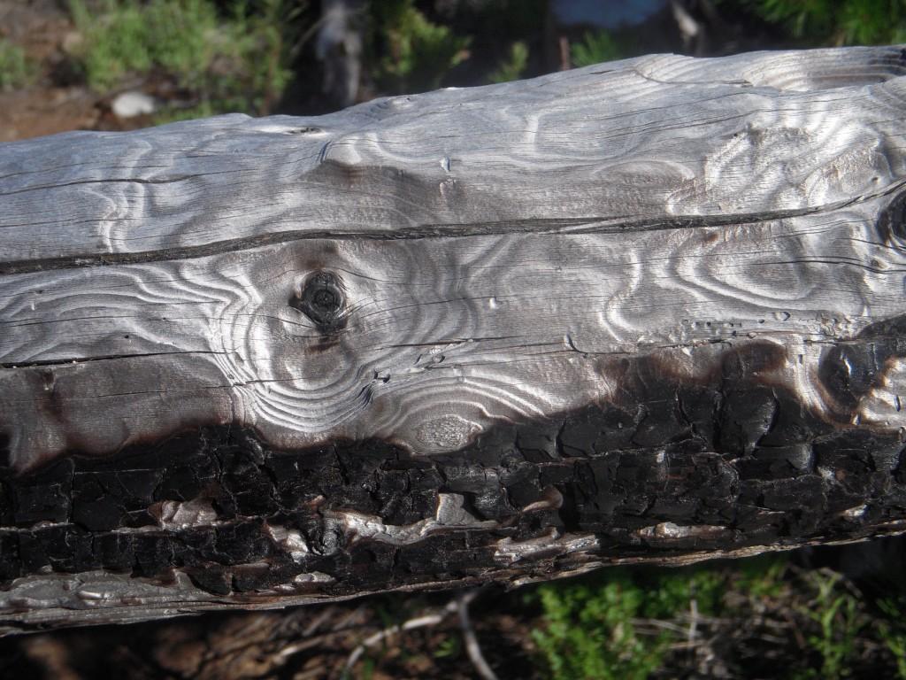 Silvery log