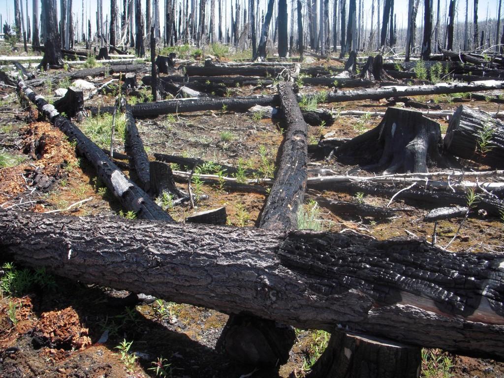 Post-fire landscape