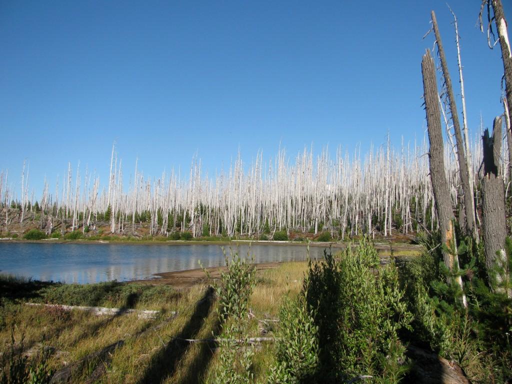 Snag Forest beside Monon Lake