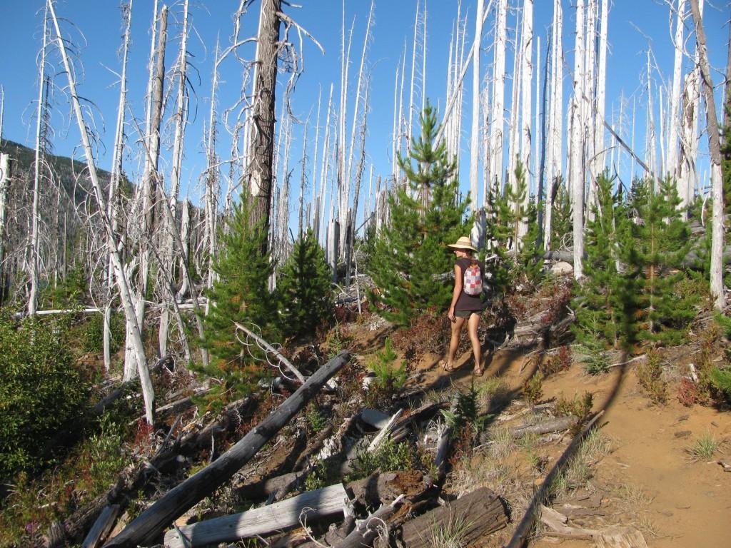 Snag Forest - Regeneration