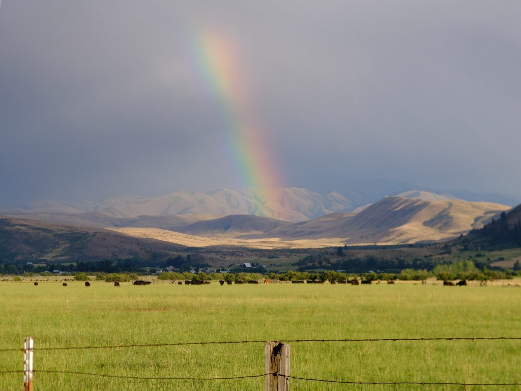 Rainbow and cattle outside Halfway