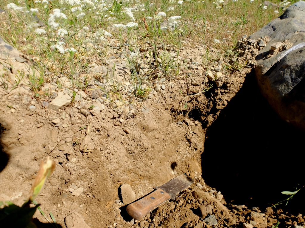 Hole dug in Yampah patch with hori-hori, a Japanese soil knife