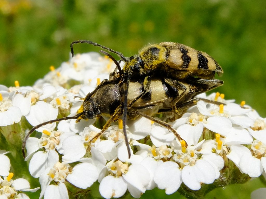 07-21-fishlake-cool-beetle-pair
