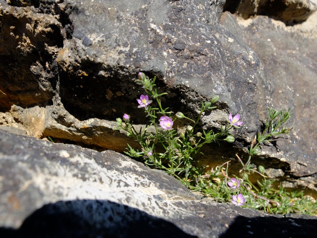Flowers growing from a crack in a boulder