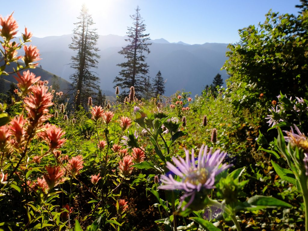 View of Hell's Canyon from the Oregon rim, with Indian Paintbrush (genus Castelleja) and Aster