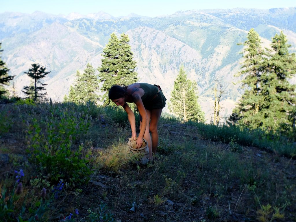 Gathering seed on Oregon rim of Hell's Canyon