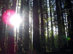 The Redwoods, in 2012