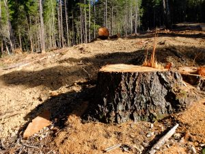 Clearcut in Humboldt County