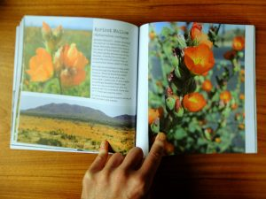 """""""A Photographic Love Letter to the Flora & Fauna of the Mojave Desert"""""""