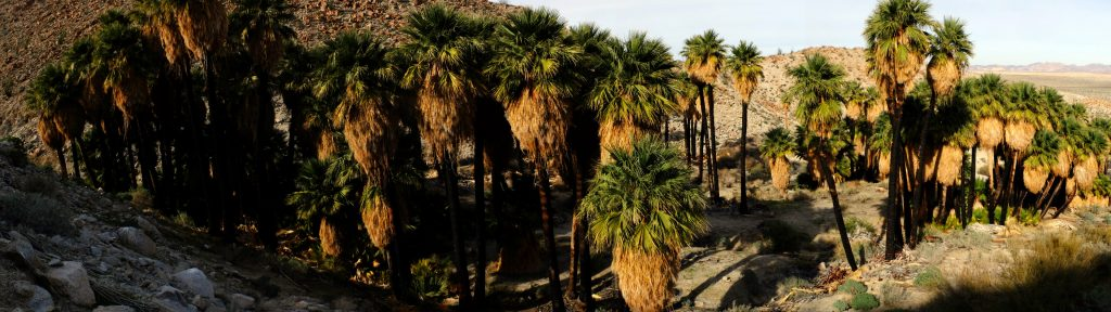 palms-palmbowlgrove-panorama-view-from-above