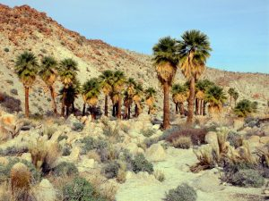 palms-pygmygrove02