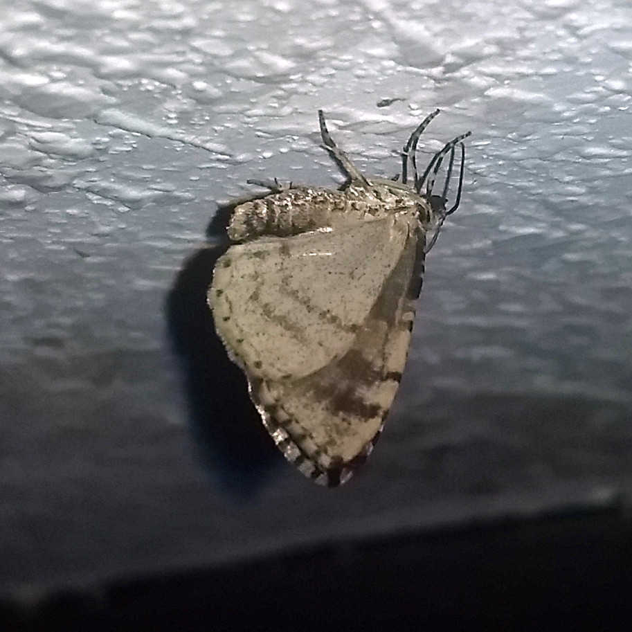 Butterfly, indoors at night