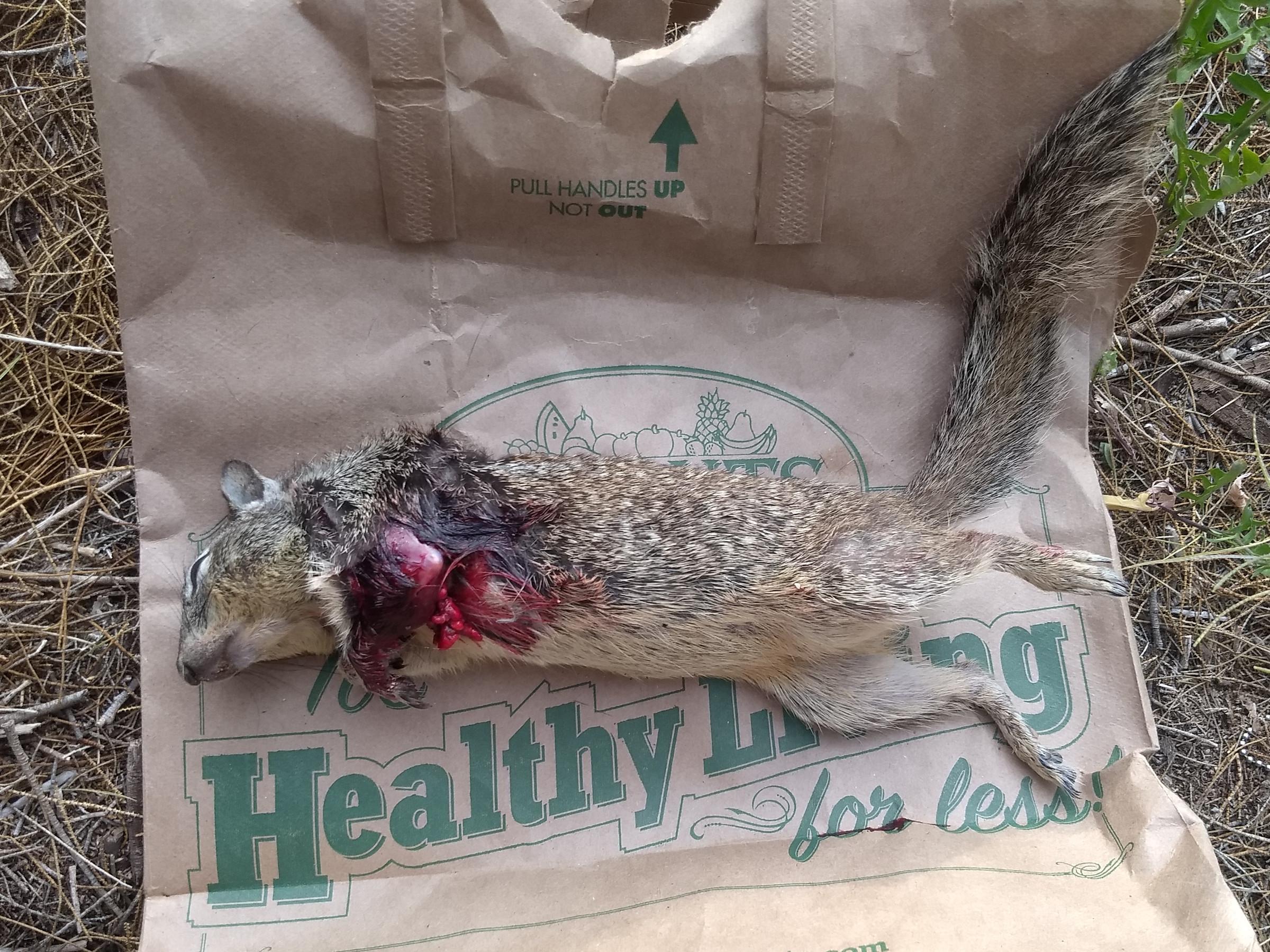 The poor dead squirrel
