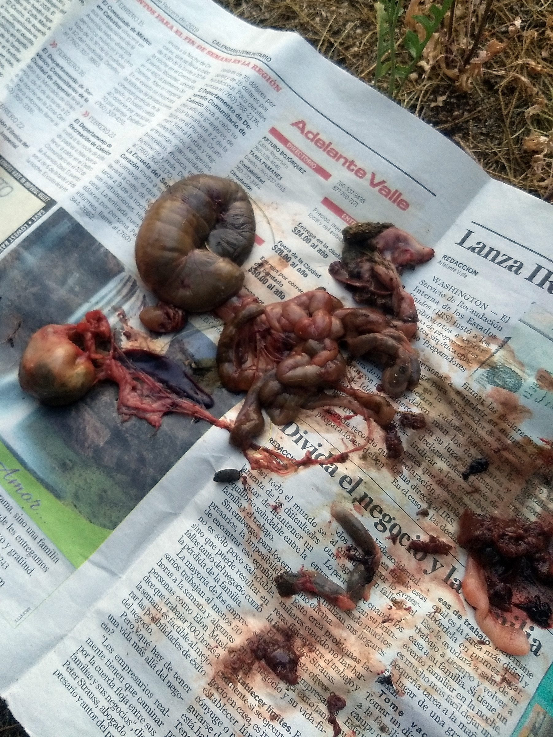 The squirrel's guts