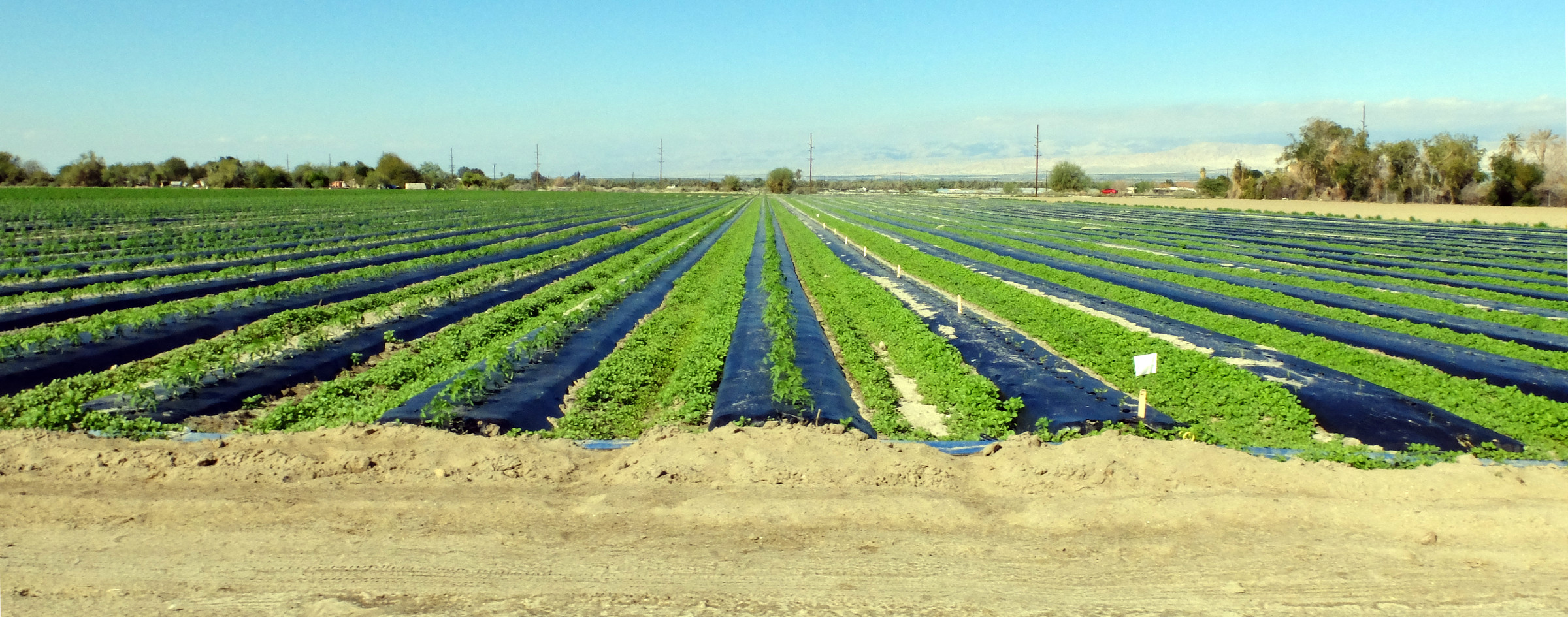Agricultural field in southern California, in the desert near the Salton Sea