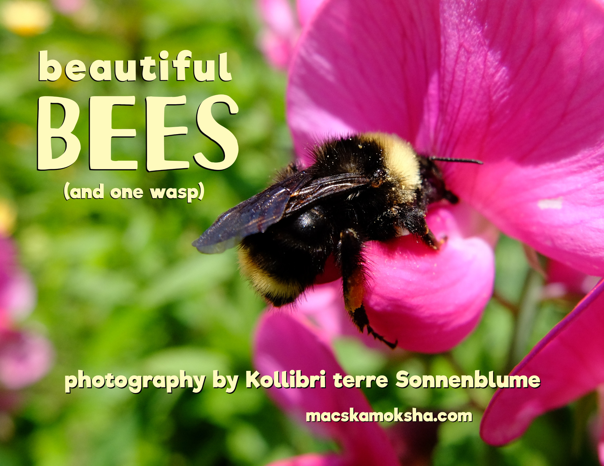 """""""Beautiful Bees (and one wasp)"""" 2020 Calendar"""