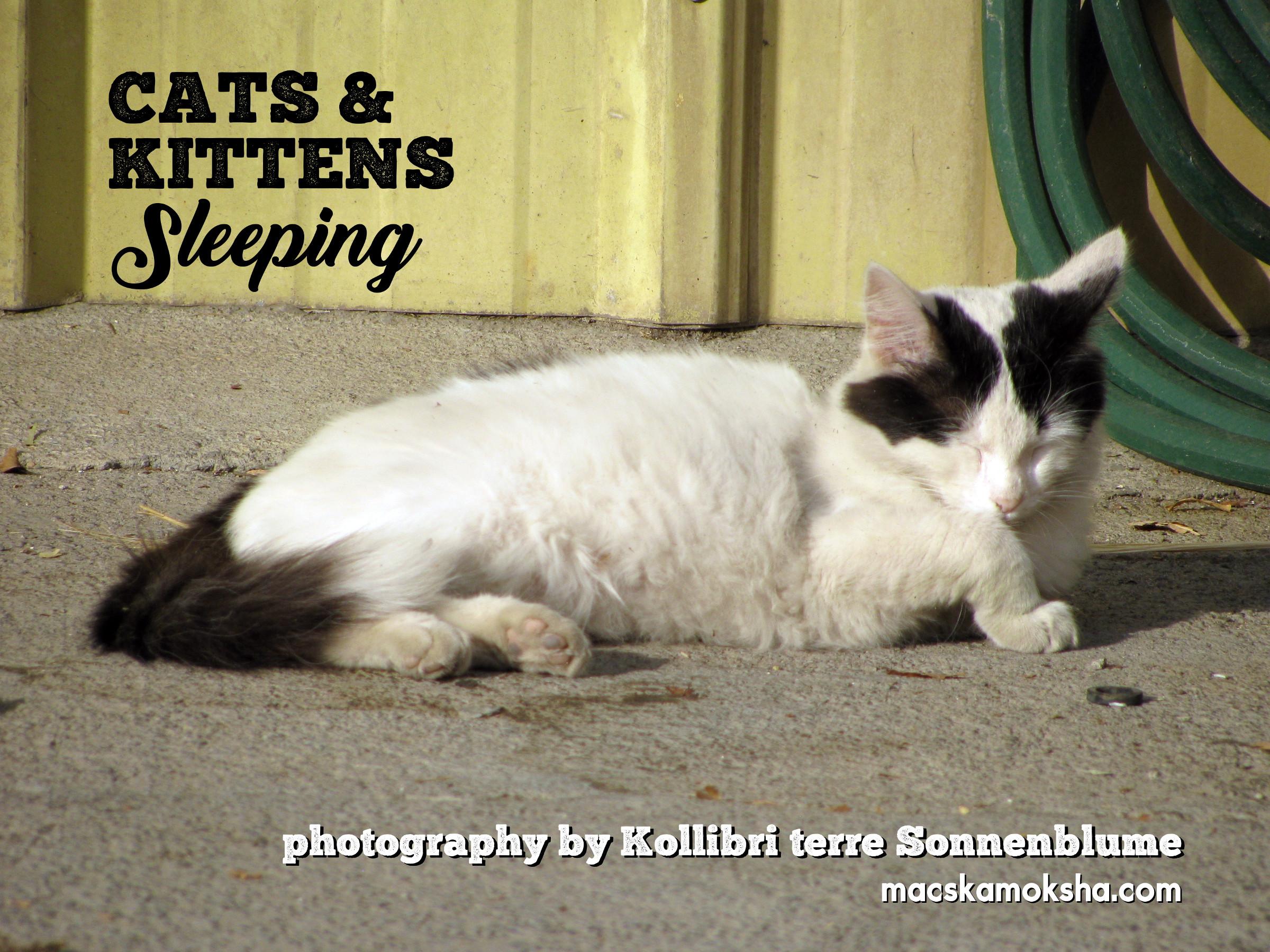 """""""Cats & Kittens Sleeping"""" 2020 Calendar"""