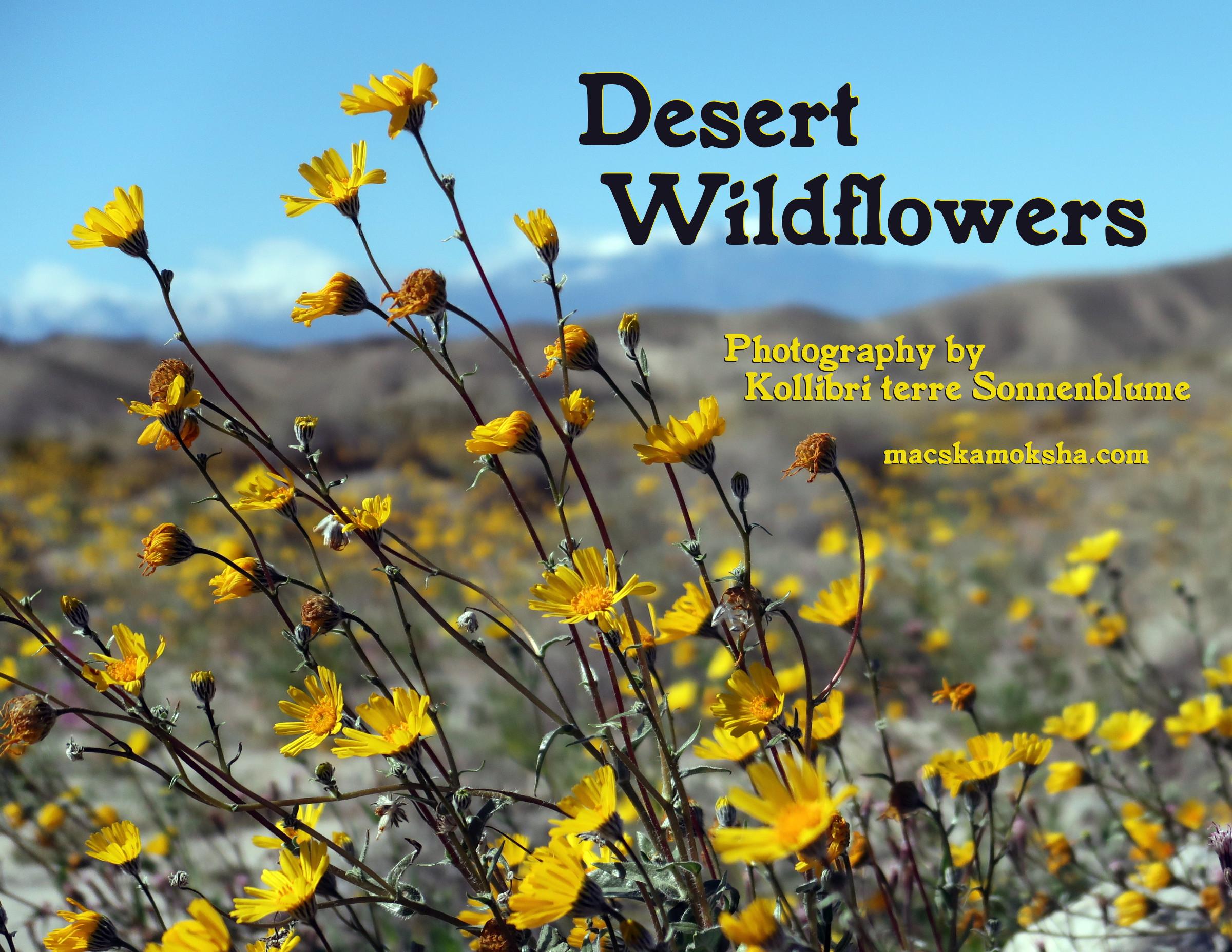 """""""Desert Wildflowers"""" 2020 Calendar"""