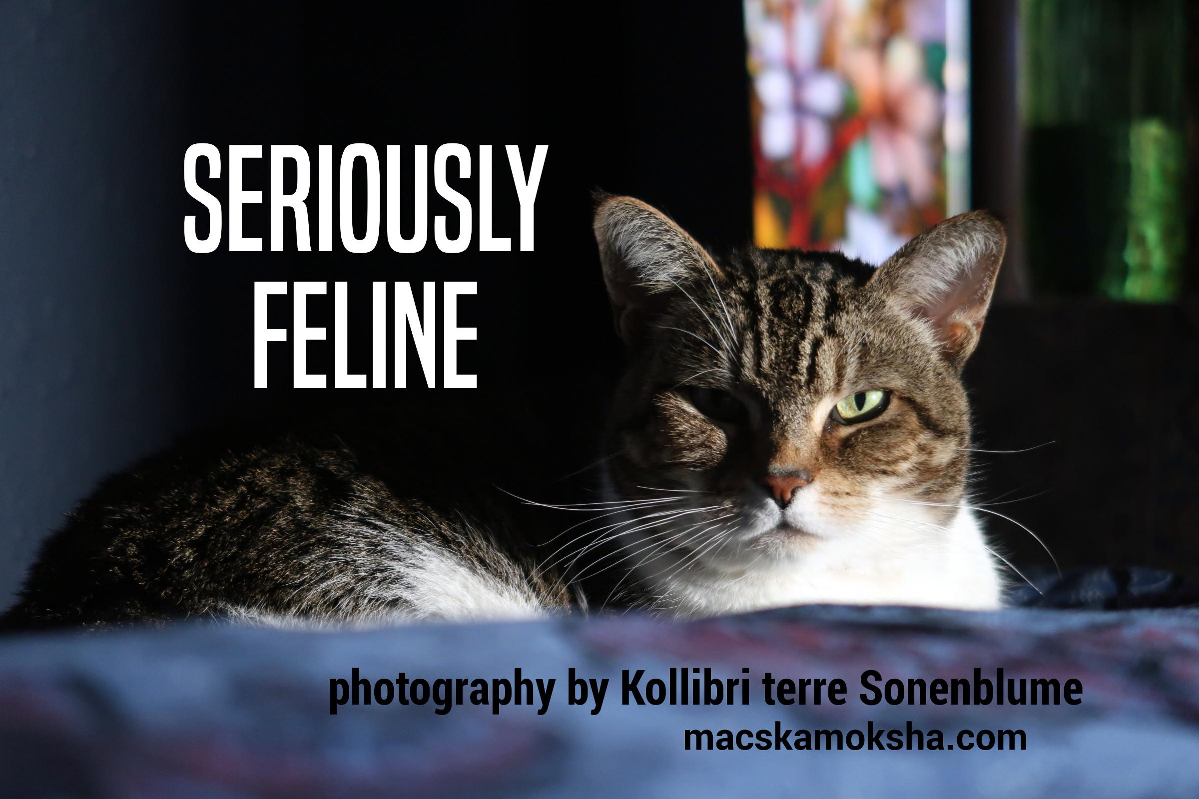 """Seriously Feline"" 2020 Calendar"