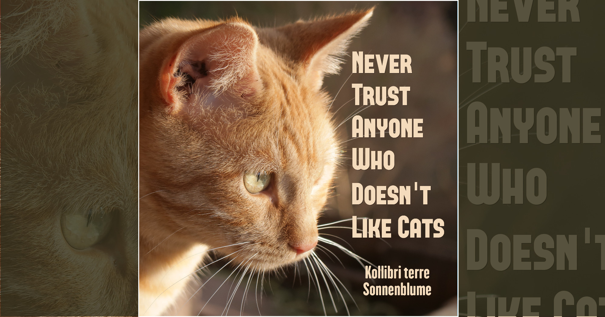"""Never Trust Anyone Who Doesn't Like Cats"" front cover"