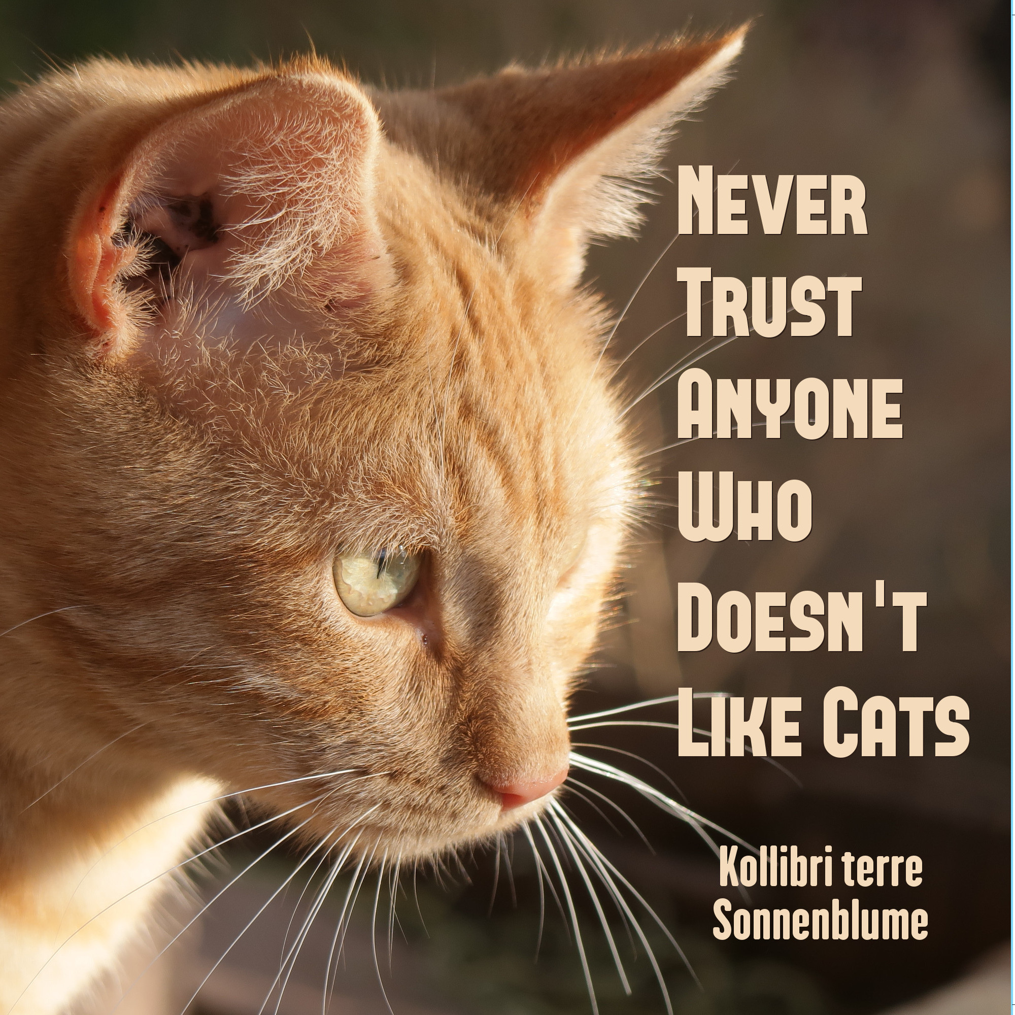 Never Trust Anyone Who Doesn't Like Cats - front cover