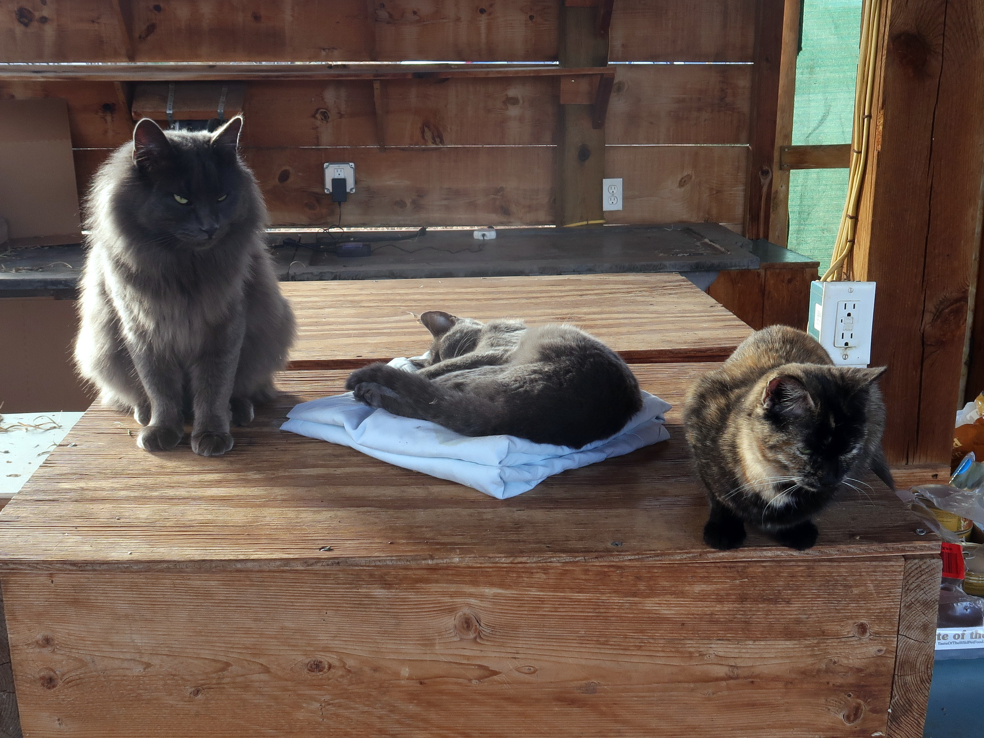 Cats sitting with their dead friend